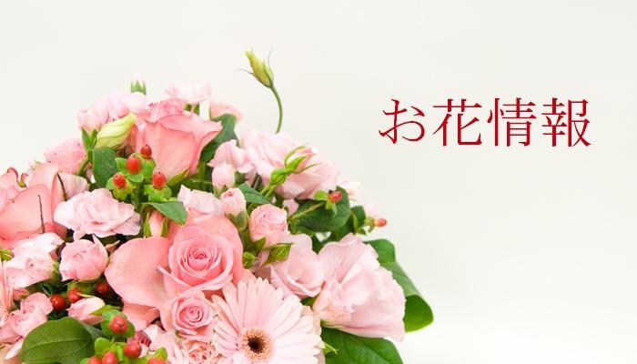 このコーナーでは、お花の管理方法やフラワーギフトについての情報を掲載しています。お花のをいただかれたときなどに是非ご覧ください。